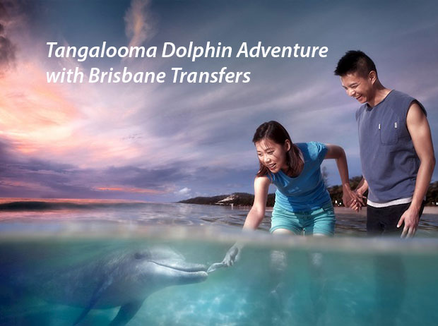 Cover Image of Tangalooma Dolphin Adventure